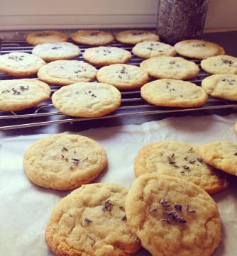 lavendercookies